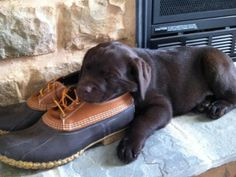 New Use: #LLBean Rubber Mocs as puppy pillow :)