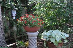 July, 2011 Impatiens and caladiums Garden Photos, Plants, Planters, Plant, Planting