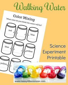 Rainbow walking water science experiment for kids. An easy science project for kids with free printable walking water worksheet. This walking rainbow experiment is perfect for preschoolers learning about colour mixing. Water Experiments For Kids, Science Experiments For Preschoolers, Preschool Science, Preschool Learning, Science Lessons, Science Activities, In Kindergarten, Science Lesson Plans, Teaching