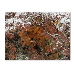 Early Snow Fall by Kurt Shaffer Photographic Print on Wrapped Canvas