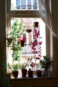 window hanging plants
