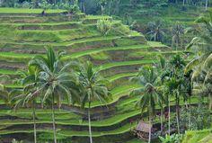 Los 10 mejores lugares para visitar en Bali Indonesia