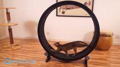 Cat Exercise Wheel - Products (No lie, I want this baaaaaaad!)