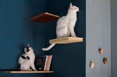 romeow cat bistrot, em roma   projeto: tommaso guerra   as prateleiras vazias estrategicamente posicionadas incentivam as brincadeiras dos gatos