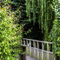 .<3 weeping willows