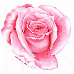 rose drawing society6 realistic roses flower drawings flowers christine sketches
