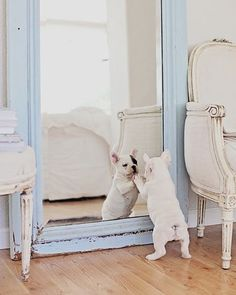 """5,223 Likes, 97 Comments - Dreamy Whites Lifestyle (@dreamywhiteslifestyle) on Instagram: """"Duchess pulling a vintage French sled.... I wanted to get this shot before Christmas however I…"""""""