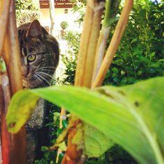 Tofito #cat