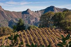 Rockpile is an AVA (Wine Appellation) above the Dry Creek Valley in Sonoma County. Have you visited any wineries that make wines from the Rockpile AVA? Dry Creek, Sonoma County, Wine Country, Ava, Wines, Monument Valley, Vineyard, Photography, Travel