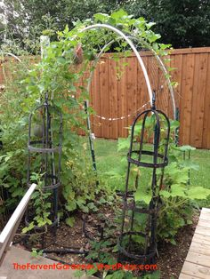 Many types of plants are super easy to grow in an outdoor garden. When you are limited on space, then look at options for garden plants to grow vertically. Planting Cantaloupe, Growing Cantaloupe, Growing Melons, Growing Grapes, Growing Vegetables, Growing Plants, Fruit Plants, Fruit Garden, Garden Plants