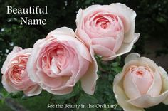See the Beauty in the Ordinary: Beautiful Name