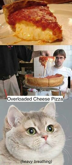 This cats face is so funny! Thats what my face would look like too though