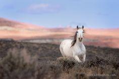 Desert Mustang by Ken Lee on 500px