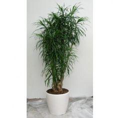 plante exotique intérieur   ... connue : Des plantes pour meubler son intérieur - Journal des Femmes
