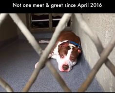 2/8/18 A homeless dog in Wantagh, New York, has been waiting for years to be adopted. Sad enough that the senior pit bull is homeless, but nobody has come to meet her in years…. Her name is Diamond and she was surrendered to the Town of Hempstead Animal Shelter when her owner decided that they could …