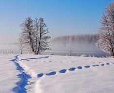 Tracks in the snow - OLYMPUS DIGITAL CAMERA