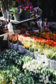 The Ultimate Guide to the Best of Torvehallerne in Copenhagen BEST FLOWERS AT TORVEHALLERNE The produce between the market stalls includes flower purveyors Stalks & Roots