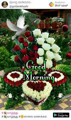 Happy Good Morning Images, Good Morning Happy Monday, Good Morning Good Night, Good Morning Flowers Rose, Good Morning Flowers Pictures, Flower Pictures, Beautiful Rose Flowers, Flowers Nature, Blessed Week