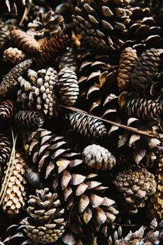 Autumn sensory box # Pine cones activates touch sense in the box. The texture and color can inhance the autumn season. Lightroom, Fotografia Macro, Brown Aesthetic, Autumn Photography, Camping Photography, Mountain Photography, Autumn Aesthetic Photography, Autumn Aesthetic Tumblr, Autumn Tumblr