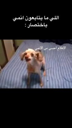 Funny Videos For Kids, Funny Short Videos, Funny Animal Videos, Jokes Quotes, Funny Quotes, Anime Cat Boy, Cute Inspirational Quotes, Best Anime Shows, Anime Wallpaper Live