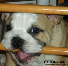 Puppies love to chew. Learn some tips on how to curb the problem behavior.