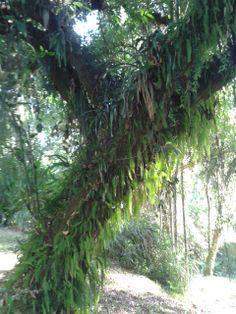 O tronco e sua beleza, abrigando populações de vegetais!