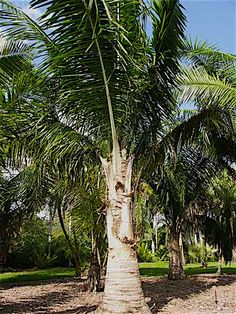 """""""What's a great place to visit in Miami that has nothing to do with partying,"""" ask several friends arriving in the city.  I send one and all to Fairchild Tropical Botanic Garden (FTBG)."""