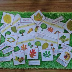 Tolles Material vom zaubereinmaleins zum Thema Wald