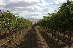 The Rebel | Winery Columbia Valley, WA