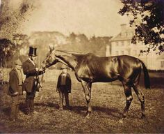 """This is one of the oldest pictures of a Thoroughbred ever taken. The horse is Wild Dayrell, born 1852. This picture was taken when he was a 3 year old in 1855. Our thanks to the Canadian Horse Racing Hall of Fame for collecting this information and photograph.  He is only six generations from Herod and eight from the Godolphin Arabian.  Wild Dayrell was a big, powerful brown horse standing 16.1 hands high and described as """"one of the finest specimens of a racehorse"""" ever seen."""