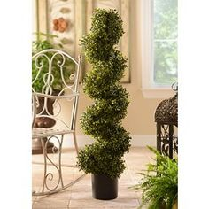 Boxwood Spiral Topiary, 48 in.