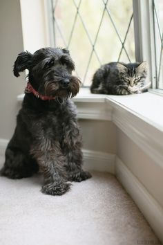 .i love the look on this puppy's face.   The kitty is in the window, he wants to be there but afraid to ask.