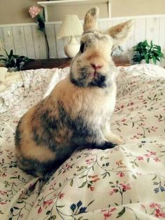 Love when they look at you like this Funny Bunnies, Baby Bunnies, Cute Bunny, Bunny Rabbits, Bunny Beds, Hamsters, Animals And Pets, Baby Animals, Funny Animals