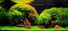 2011 AGA Aquascaping Contest - Entry #21