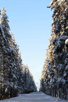 Alberta, Canada (Greg Binder)