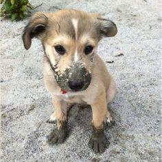 muddy pup