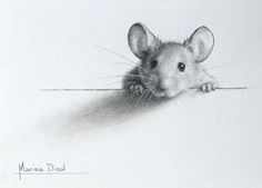Kleine Maus - My list of beautiful animals Animal Paintings, Animal Drawings, Cute Drawings, Pencil Sketches Of Animals, Drawing Animals, Nature Paintings, Art Du Croquis, Art Mignon, Graphite Drawings