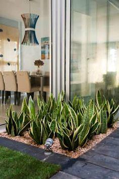 Indoor Garden Office and Office Plants Design Ideas For Summer 50 garden Small Gardens, Outdoor Gardens, Modern Gardens, Tropical Gardens, Succulents Garden, Planting Flowers, Garden Plants, Dry Garden, Office Plants