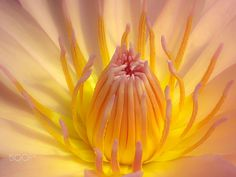 Golden Lady by Susan Chan on Macro Photography, Antelope Canyon, Lady, Awesome, Nature, Flowers, Naturaleza, Off Grid, Natural