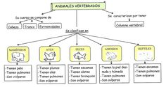 esquema animales vertebrados para escolares Animal Body Parts, Animal Species, Vertebrates, Animal Projects, Science Classroom, Science Activities, Zoo Animals, Learning Resources, Science And Nature