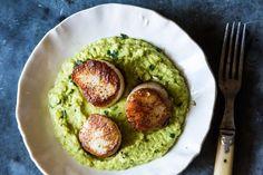 Seared Sea Scallops with Gingered Pea Purée and Cilantro Gremolata recipe on Food52