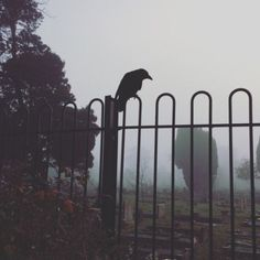 New post on bpd-witch The Raven, Autumn Aesthetic, Witch Aesthetic, Memes Arte, The Ancient Magus Bride, Southern Gothic, Season Of The Witch, The Exorcist, Ex Machina