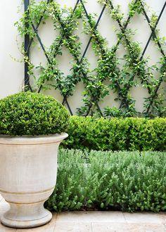 Small garden inspira