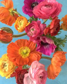Photography Themes, Floral Photography, Big Flowers, Beautiful Flowers, Lovely Flowers Wallpaper, Fuerza Natural, Icelandic Poppies, Flower Aesthetic, Pretty Pictures