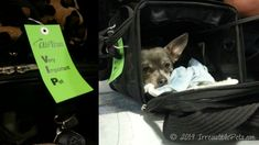 tips for air travel with your small dog #pet travel
