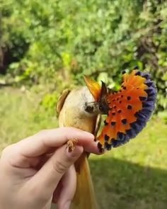 Visit our website today for beautiful wooden watches And Sunglasses Portion of proceeds goes to reforestation Pretty Birds, Beautiful Birds, Animals Beautiful, Funny Birds, Cute Funny Animals, Exotic Birds, Colorful Birds, Rare Animals, Animals And Pets