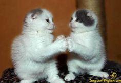 Wonder twins power, ACTIVATE!