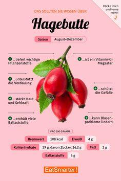 Das solltest du über Hagebutten wissen   eatsmarter.de #ernährung #infografik #hagebutte