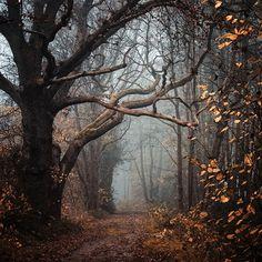 Tree on a foggy path.