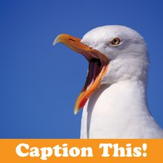 You supply the caption. What is this bird squawking about? #captionthis
